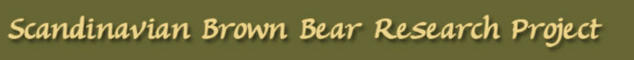 brown bear logo